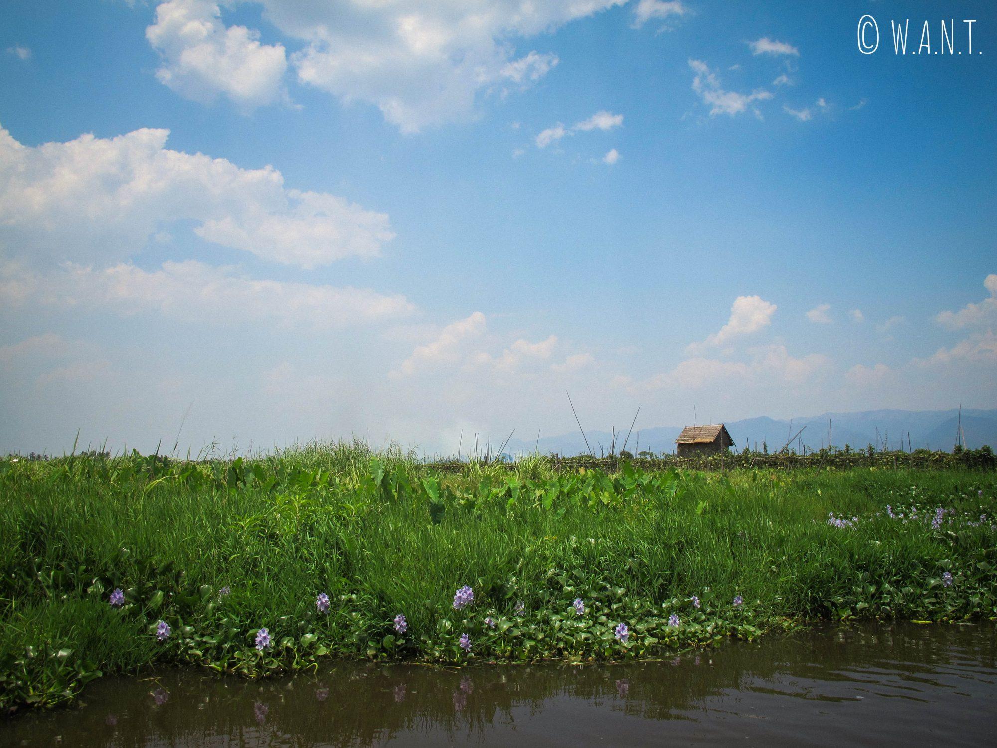 Jardins flottants le long du canal
