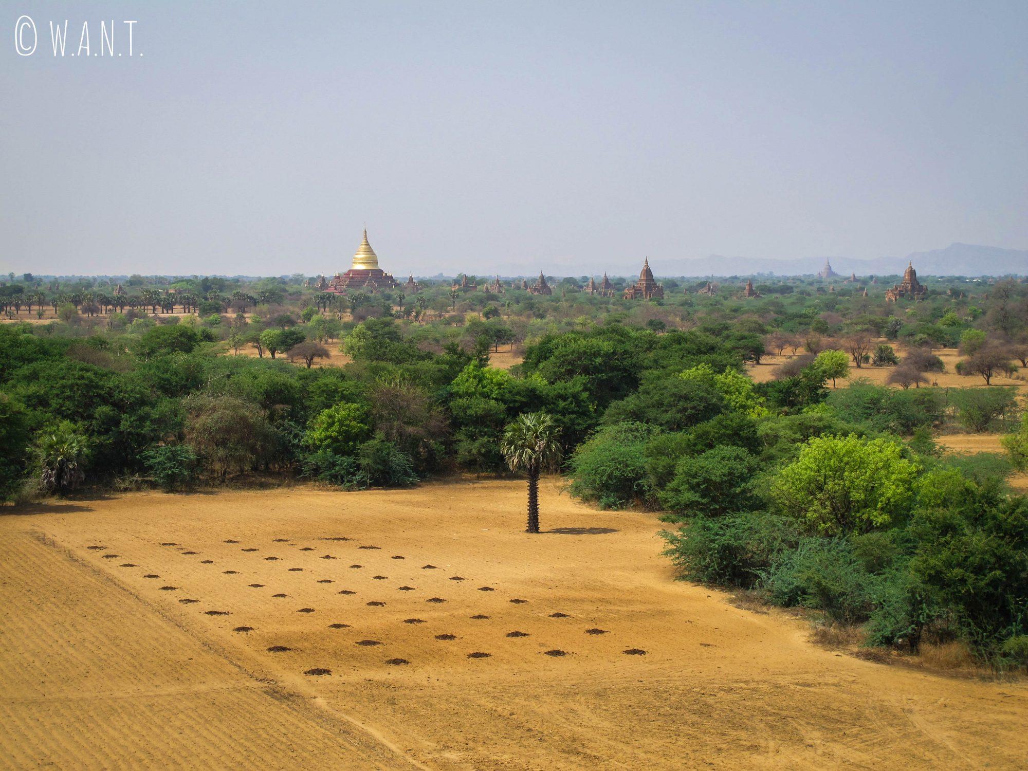 Vue sur la faune environnante et la pagode Dhammayanzika