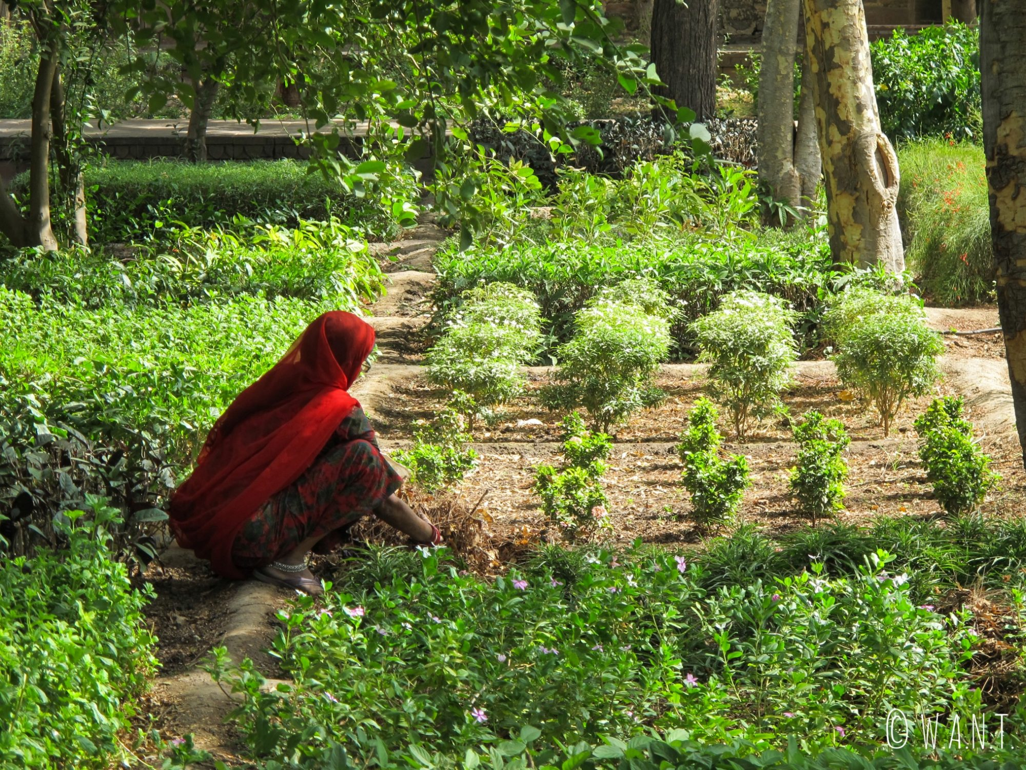 Ce sont les femmes qui s'occupent du jardinage au Chokelao garden