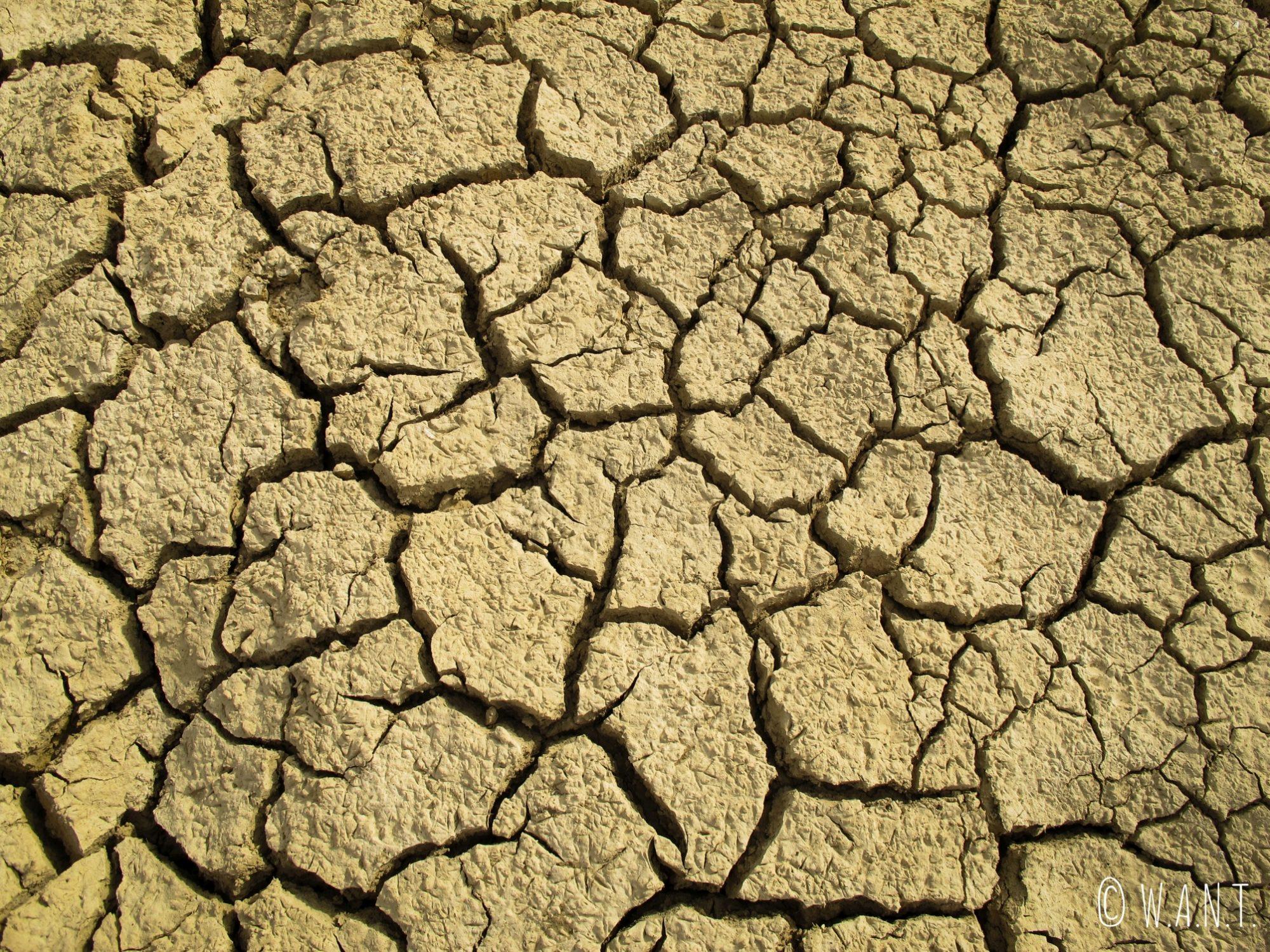 La terre est asséchée aux alentours d'un oasis du désert du Thar