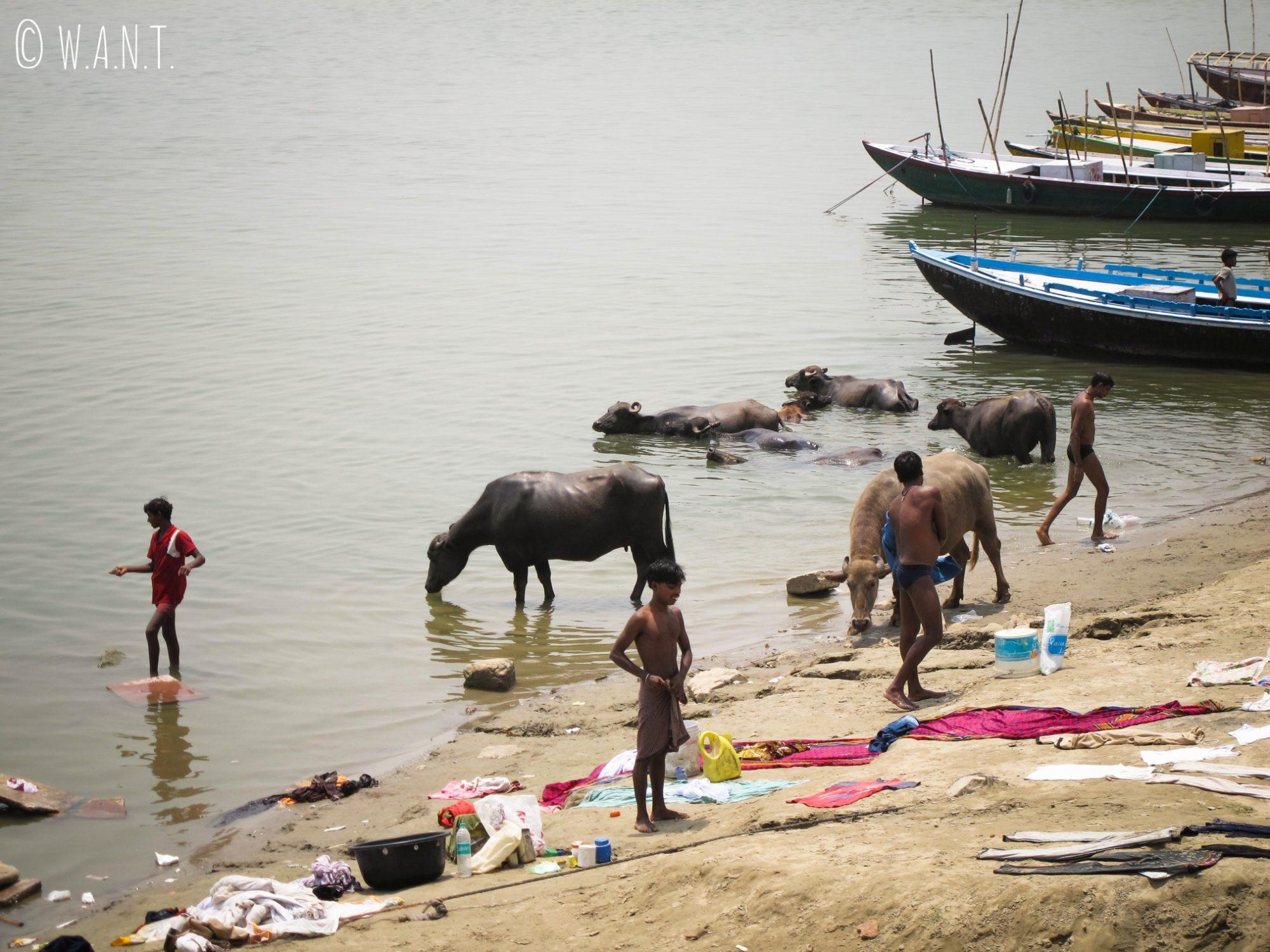 Le Gange rythme la vie quotidienne des habitants de Varanasi