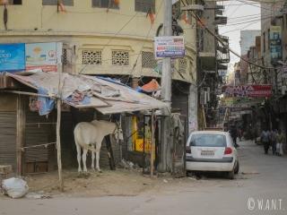 Rencontre surprenante dans les rues de Delhi - un parking à poney !