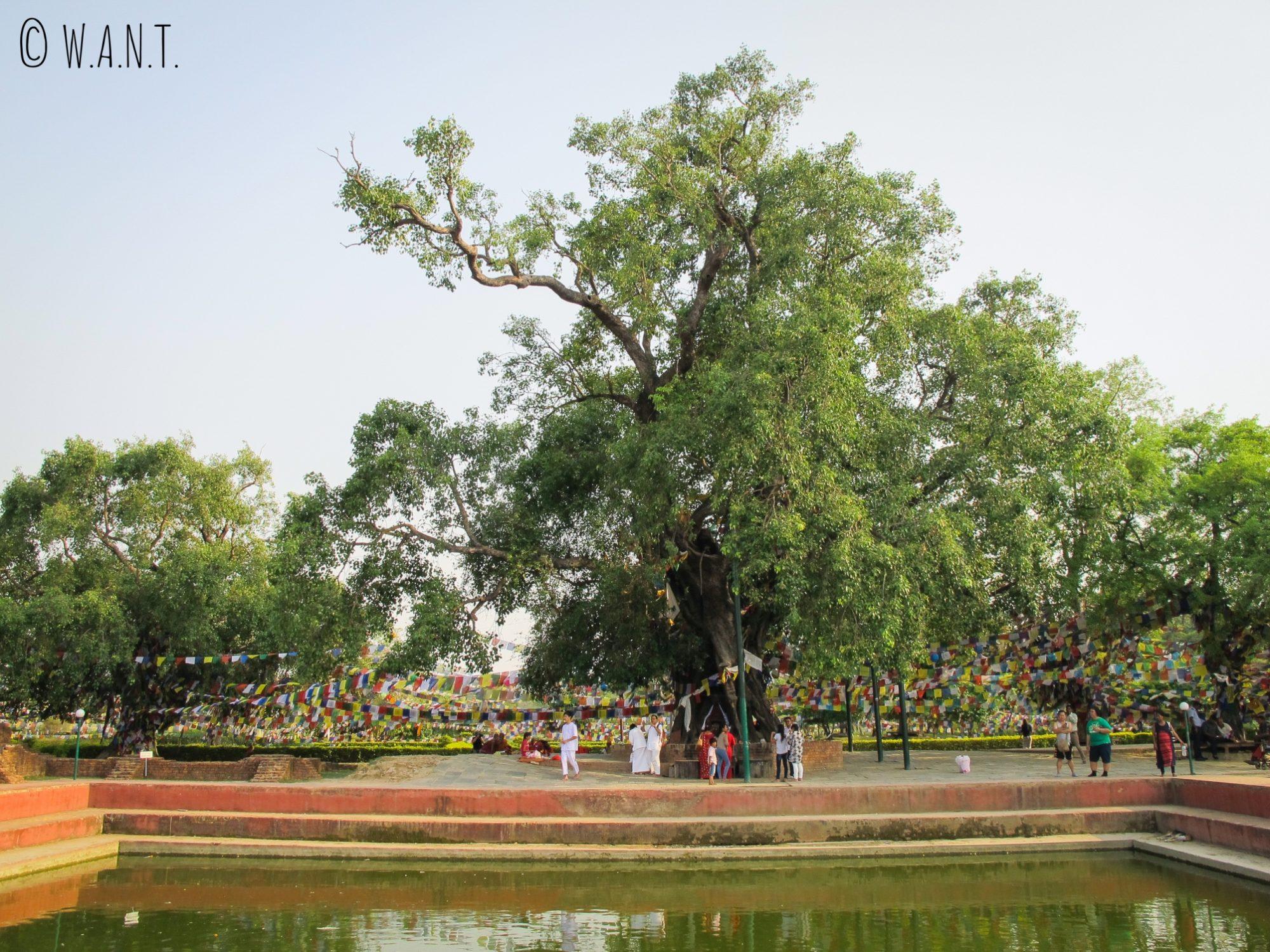 C'est dans ce bassin sacré du nom de Pushkarni que Bouddha a reçu son premier bain