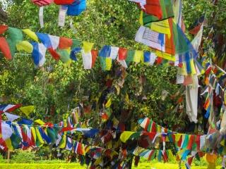 De très nombreux drapeaux de prières entourent les arbres du temple Maya Devi