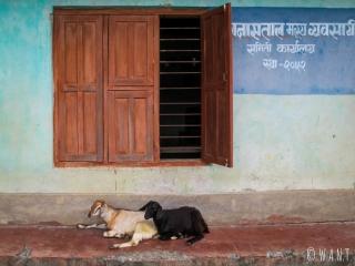 Deux chèvres se reposent sur la deventure de cette échoppe