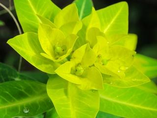 La flore du sanctuaire des Annapurnas est un délice pour les yeux