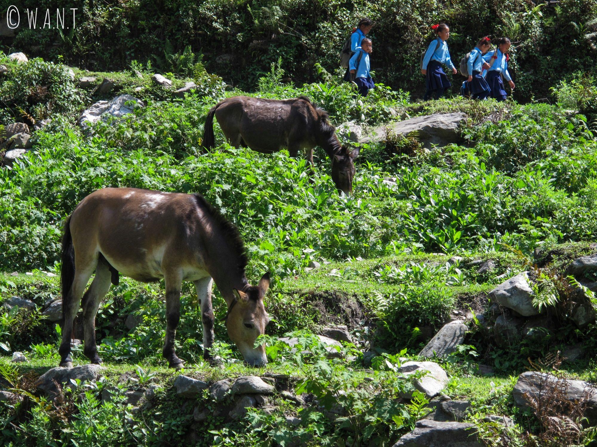 Les enfants vivant dans les villages doivent parfois parcourir plusieurs kilomètres pour se rendre à l'école