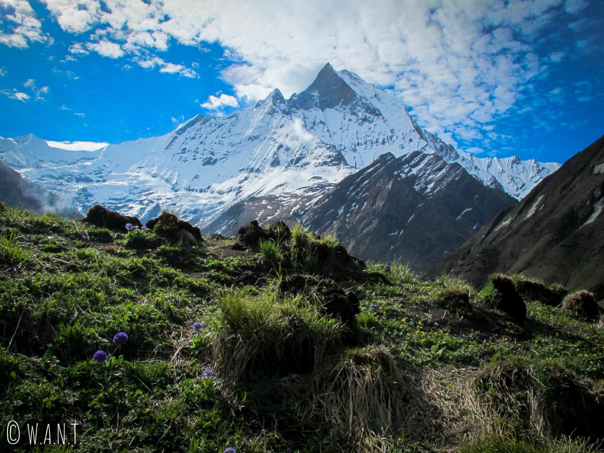 Majestueux Machhapuchhre depuis le camp de base de l'Annapurna