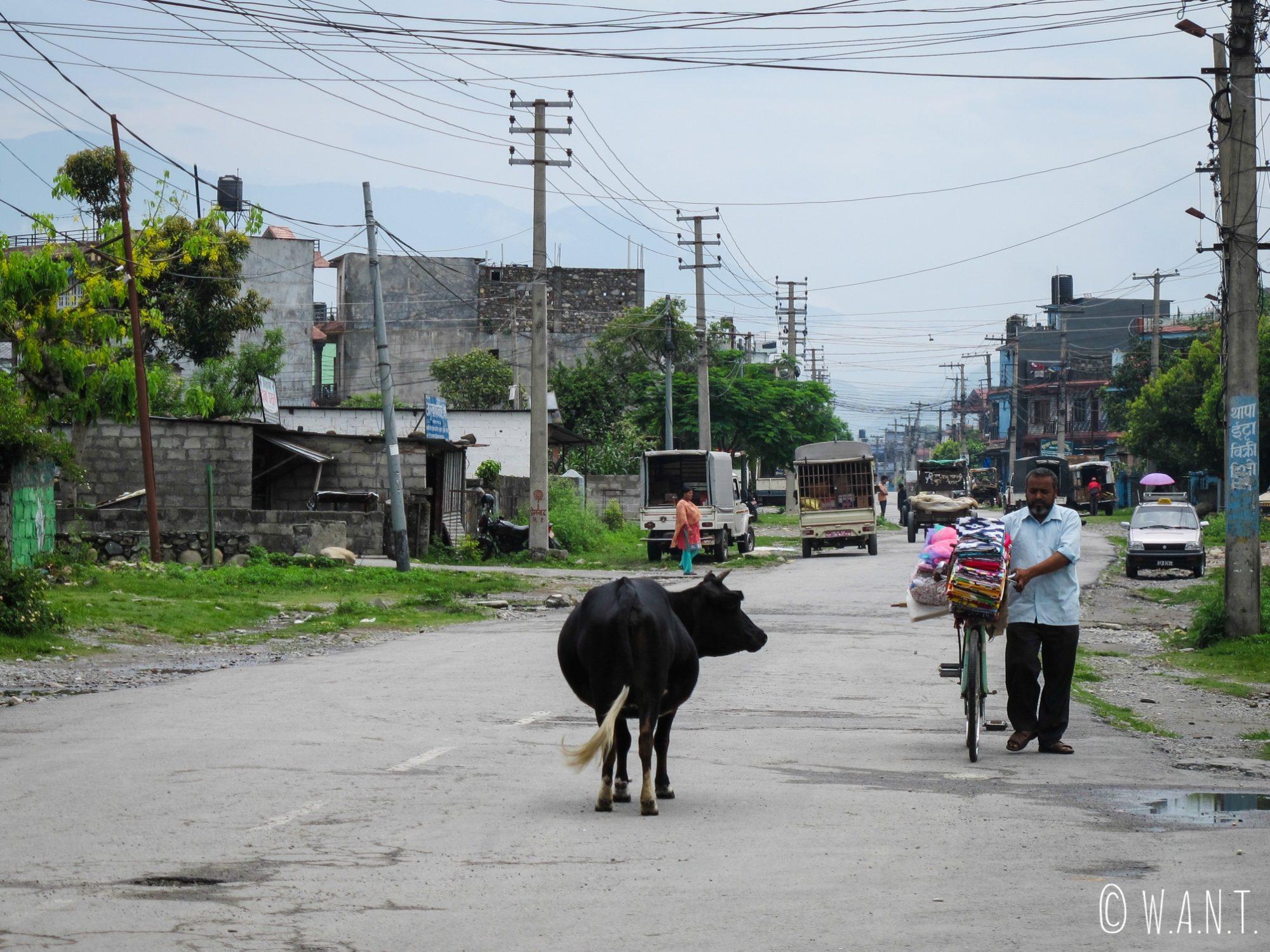 Rue de Pokhara en chemin vers l'International Mountain Museum