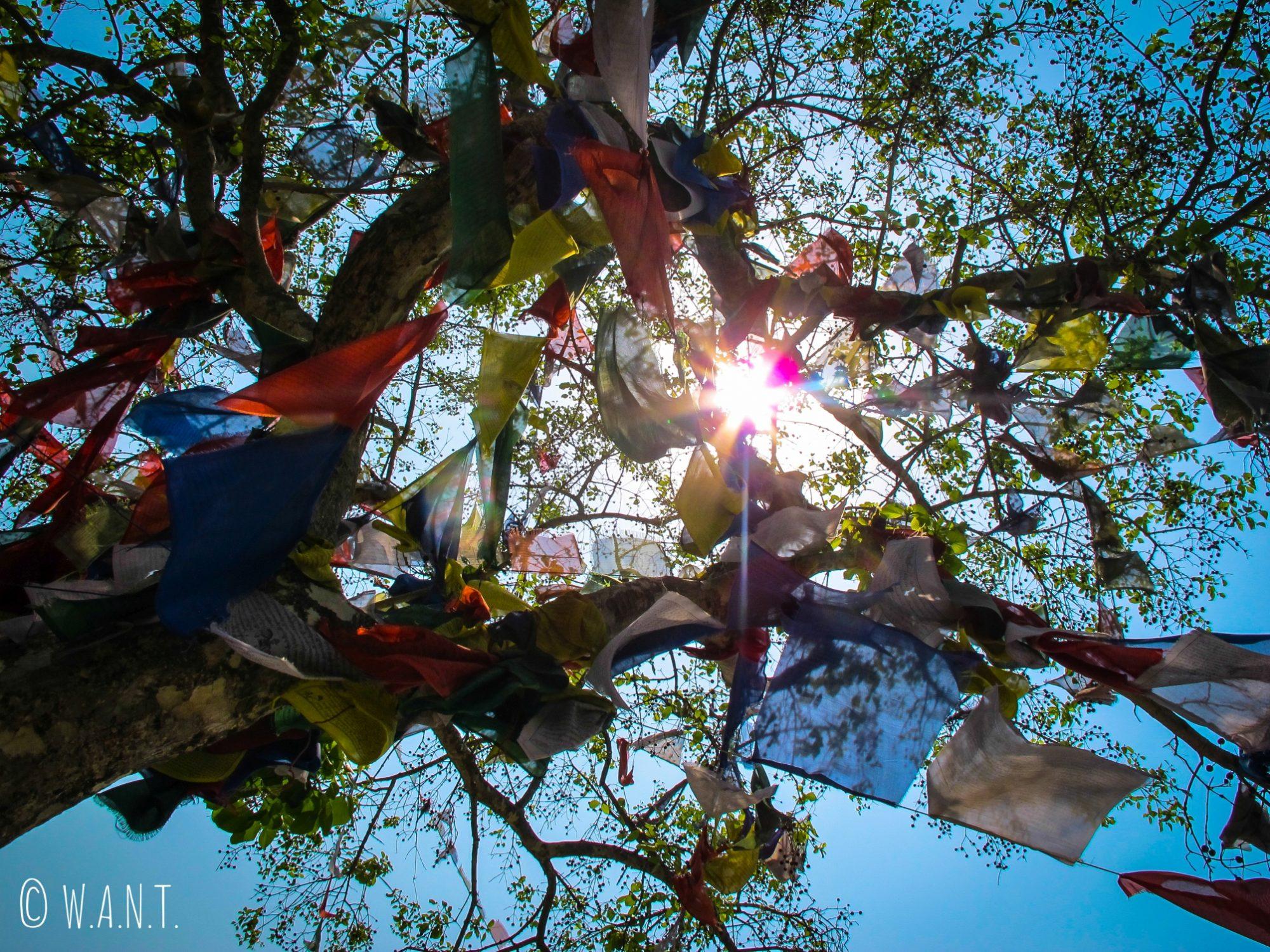Soleil dans les branches des arbres du temple Maya Devi