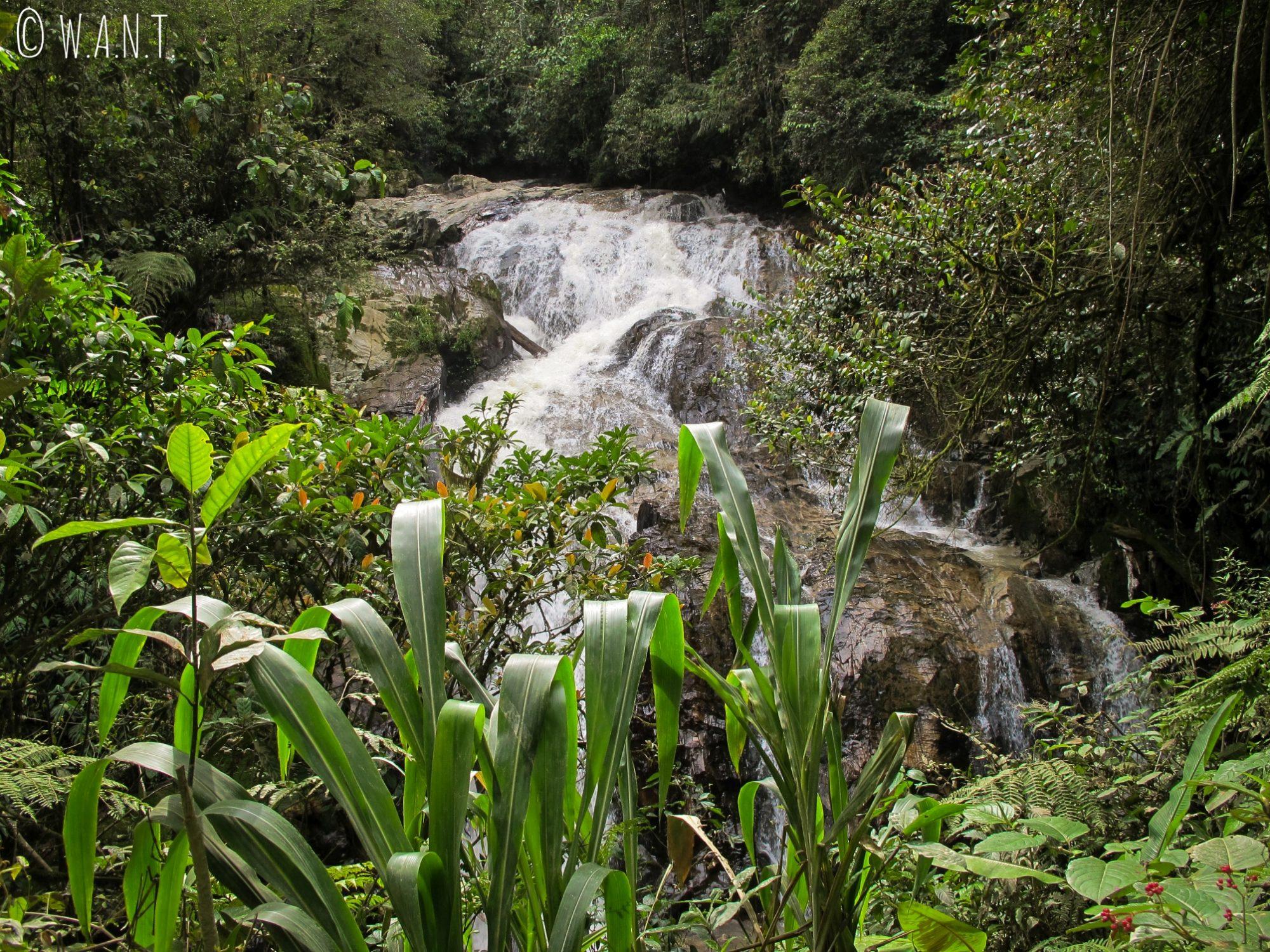 A la fin du trail numéro 8, nous découvrons les cascades de Robinson