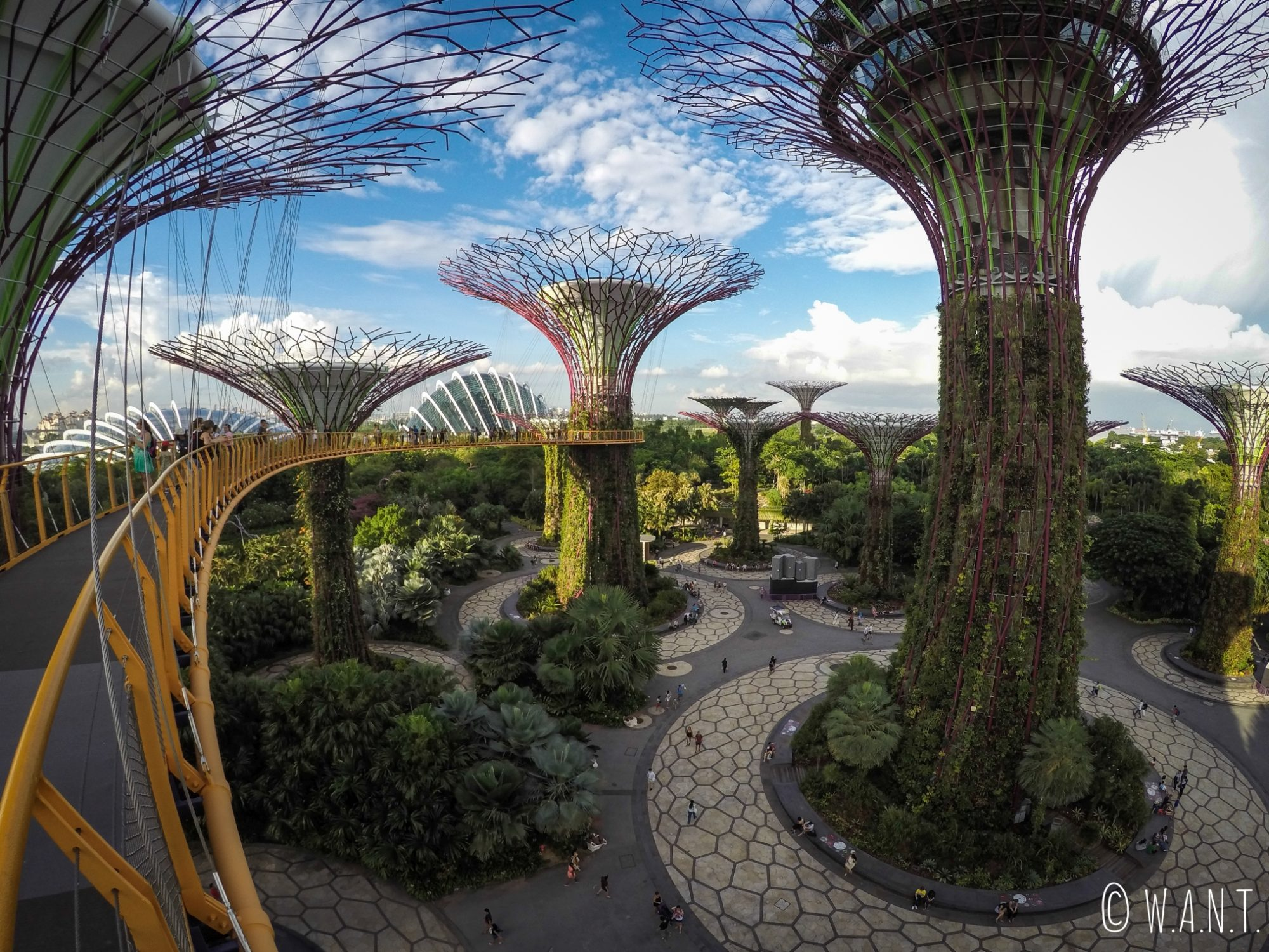 Au coeur des Supertrees de Gardens by the bay