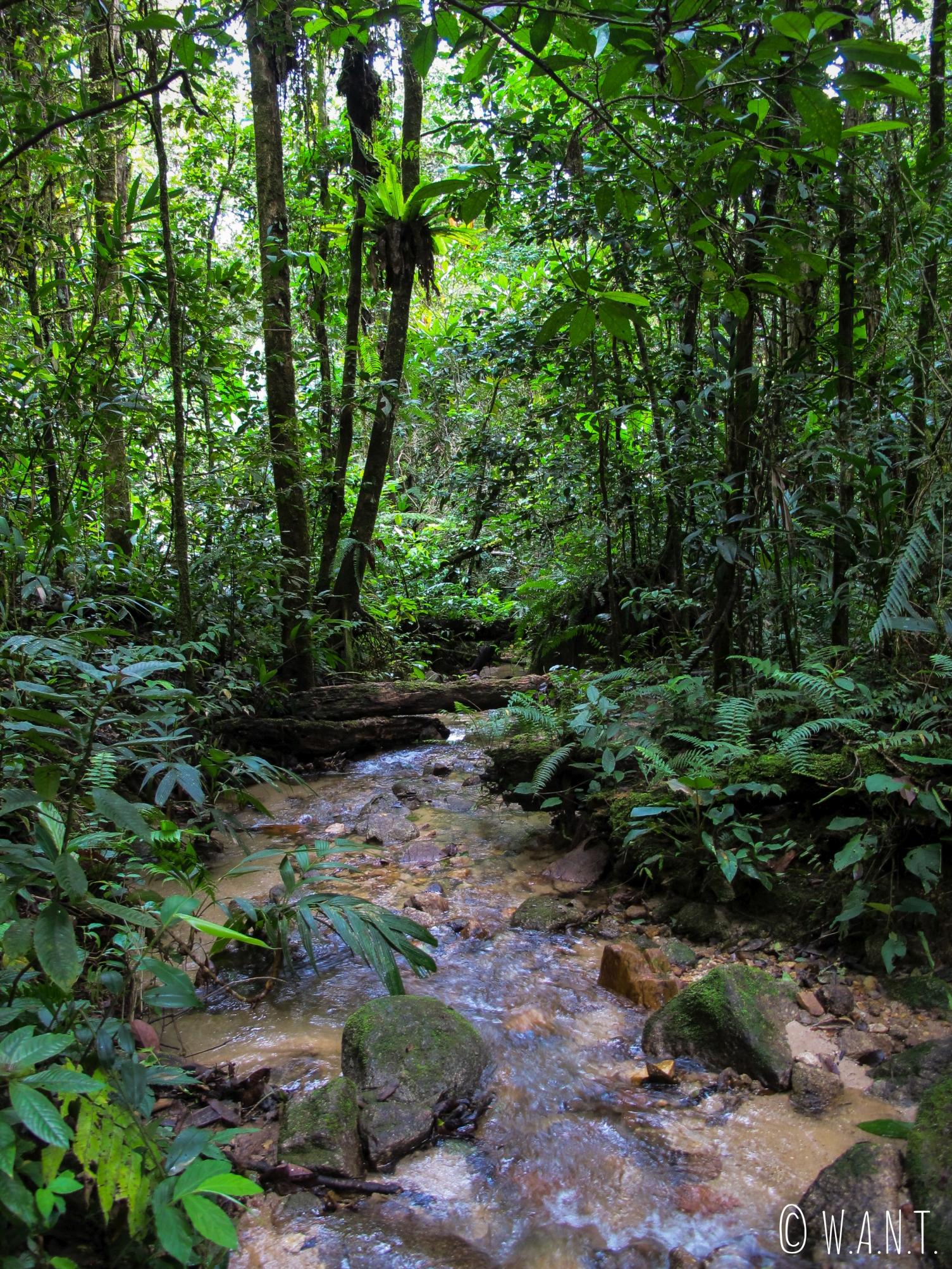 Dans la jungle des Cameron Highlands, nous devons traverser des cours d'eau