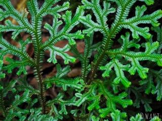 La faune est très diverse dans les forêts humides des Cameron Highlands