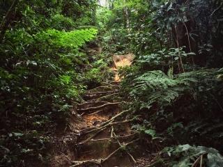 Le chemin du trail numéro 3 des Cameron Highlands est parsemé d'embûches