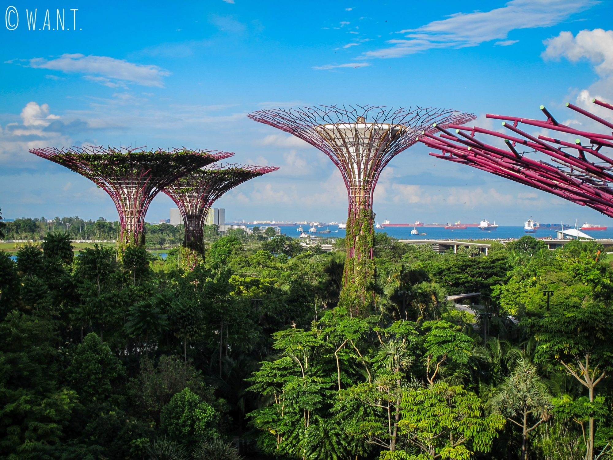 Les Supertrees de Garden by the bay servent de support pour la végétation