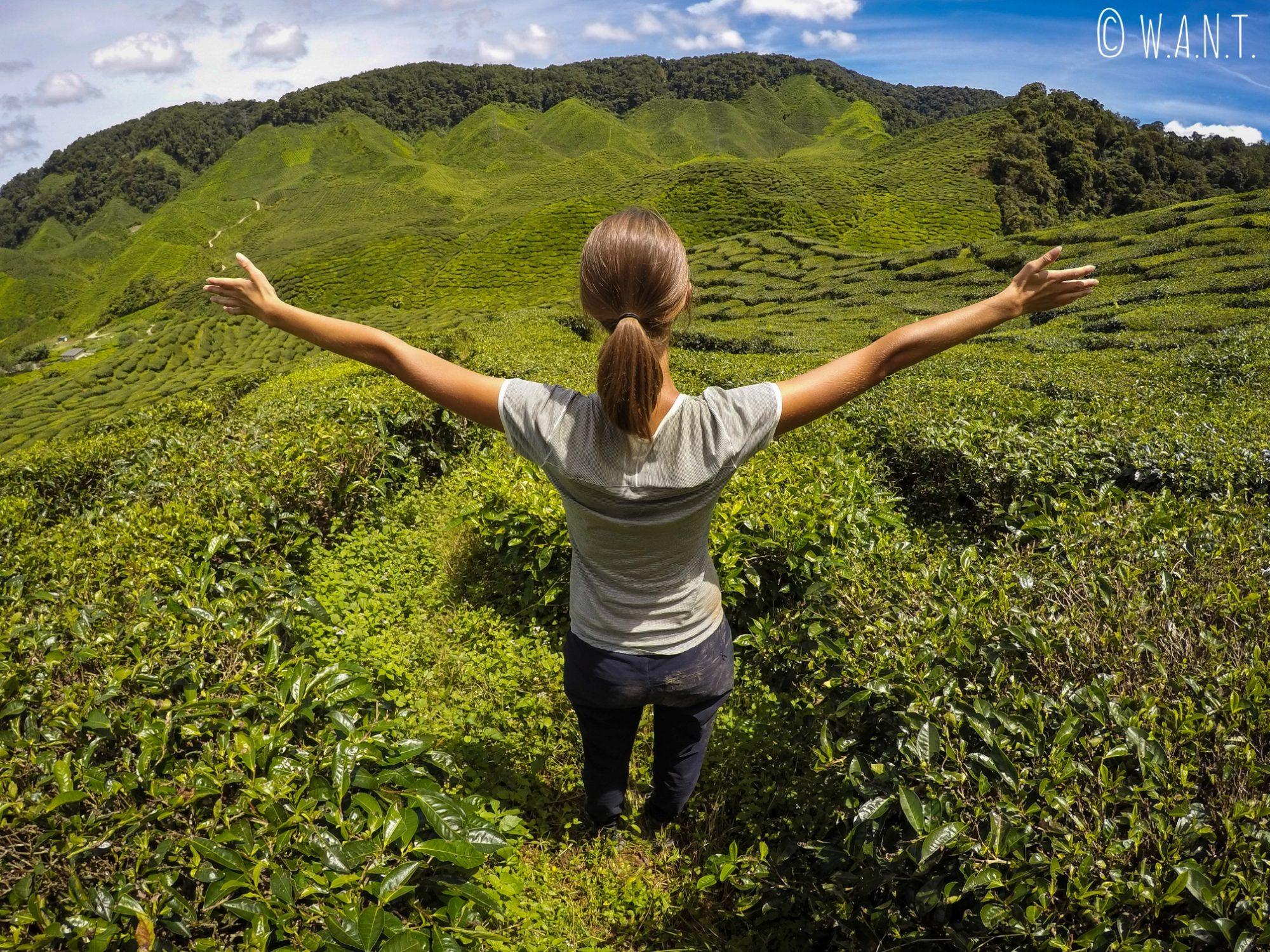 Marion pose devant les plans de thé des Cameron Highlands