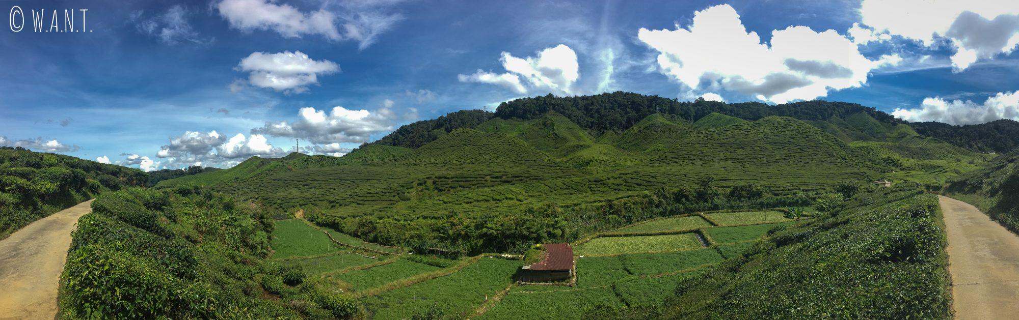 Panorama sur la plantation Barath Tea de Tanah Rata