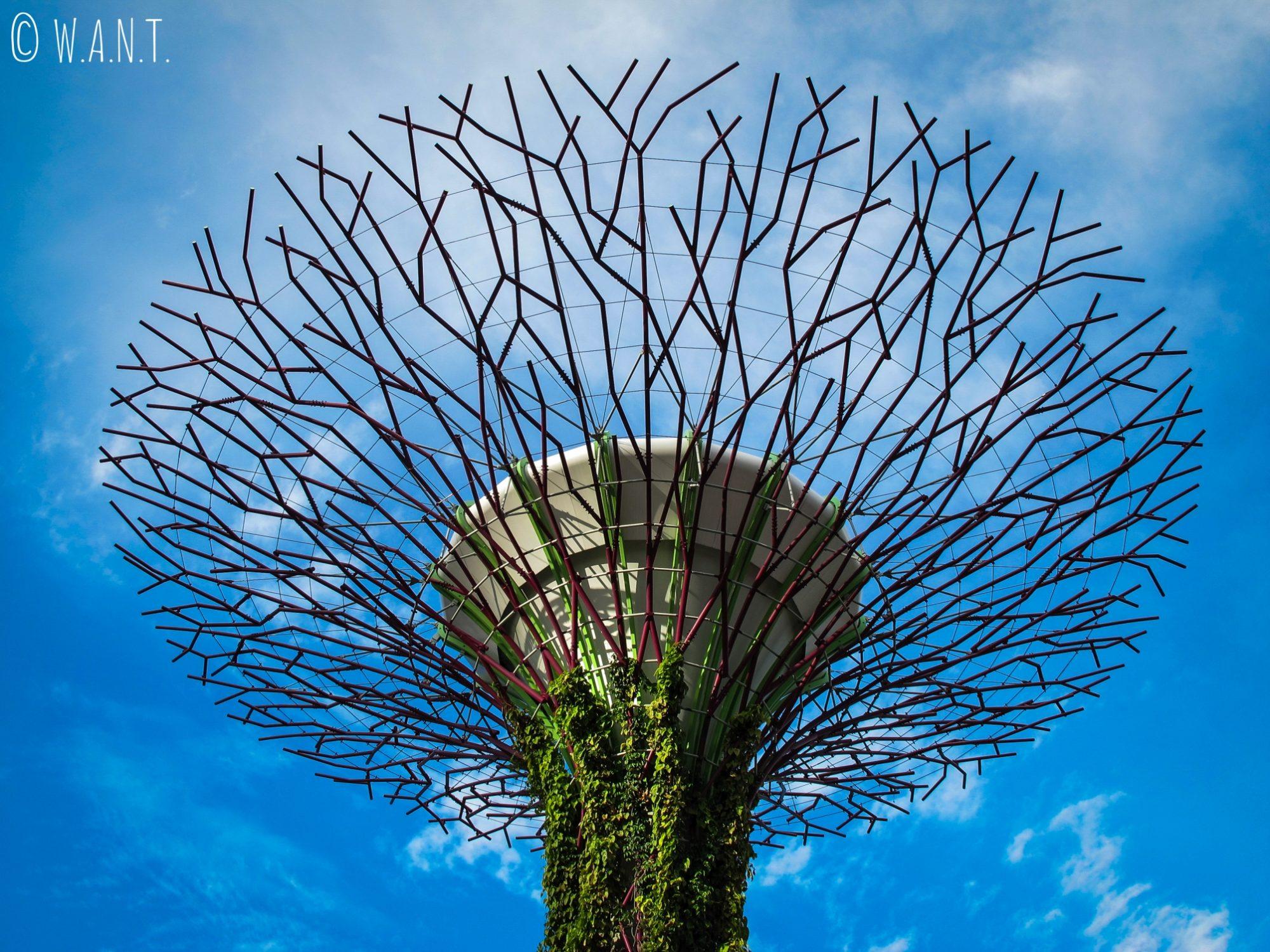 Partie supérieure d'un Supertree de Singapour