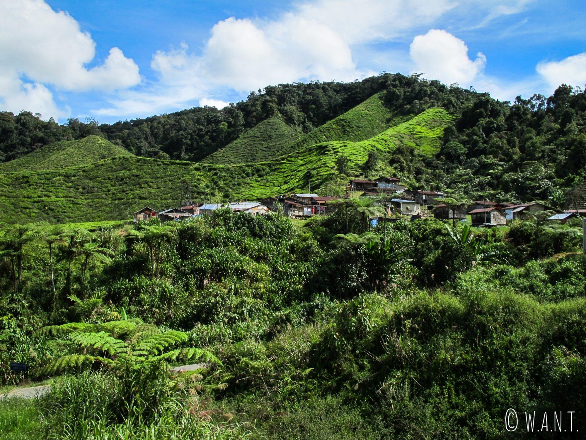 Vue sur le village d'Orang Asli depuis le trail numéro 6