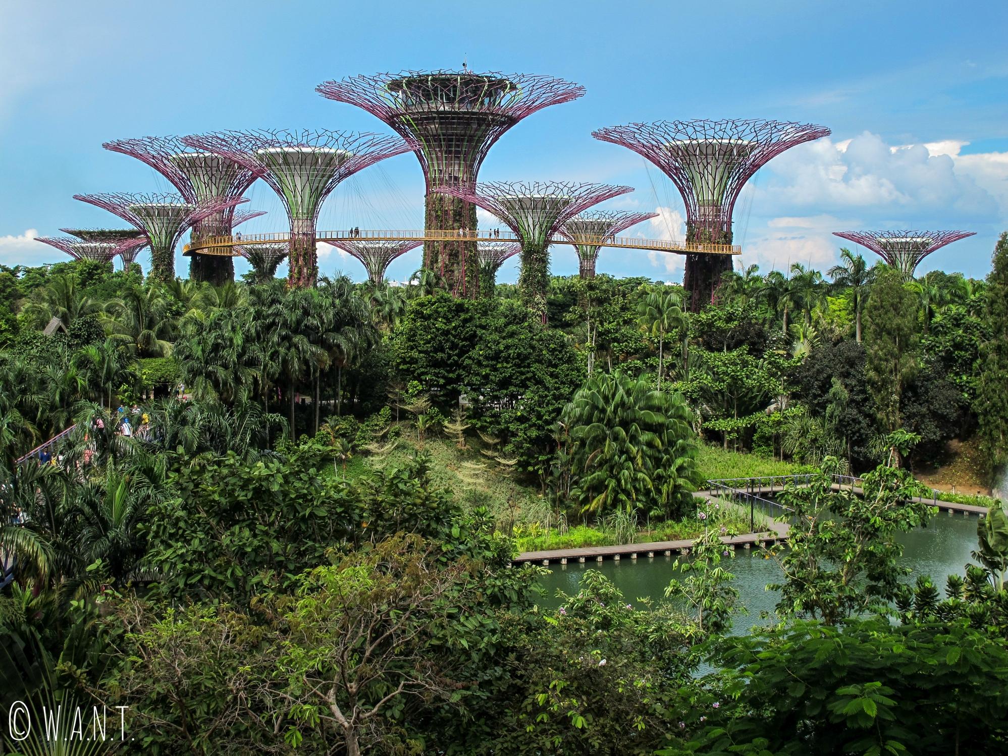 Vue sur les Supertrees situés au coeur de Gardens by the bay