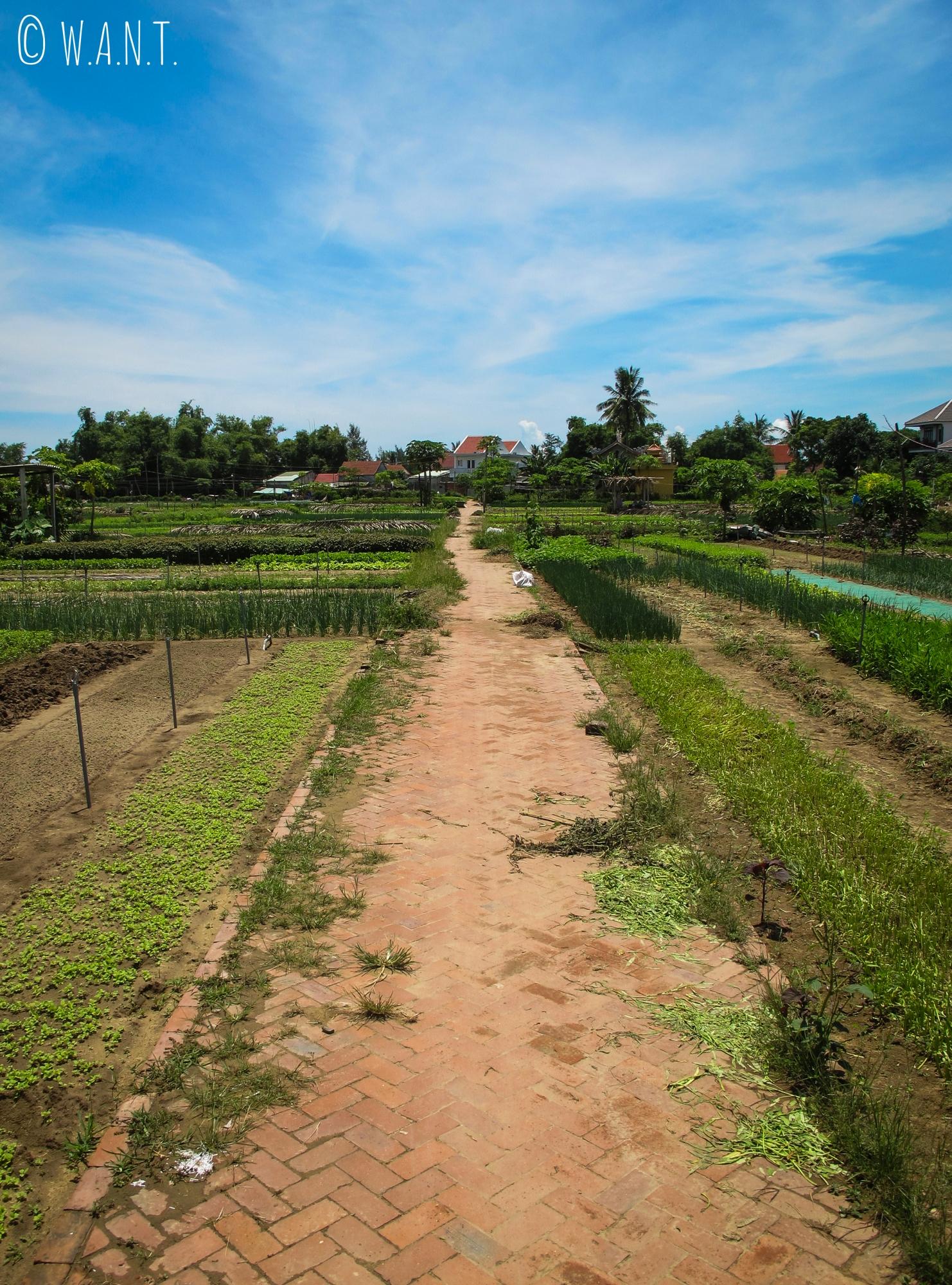 Allée du village écologique de Tra Que à Hoi An