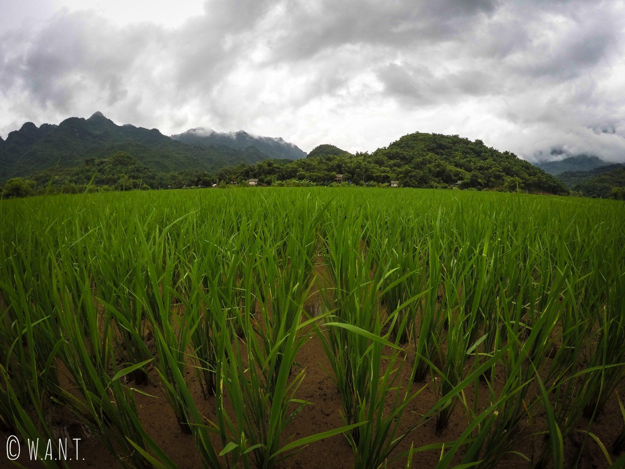 Au cœur des rizières de Mai Chau