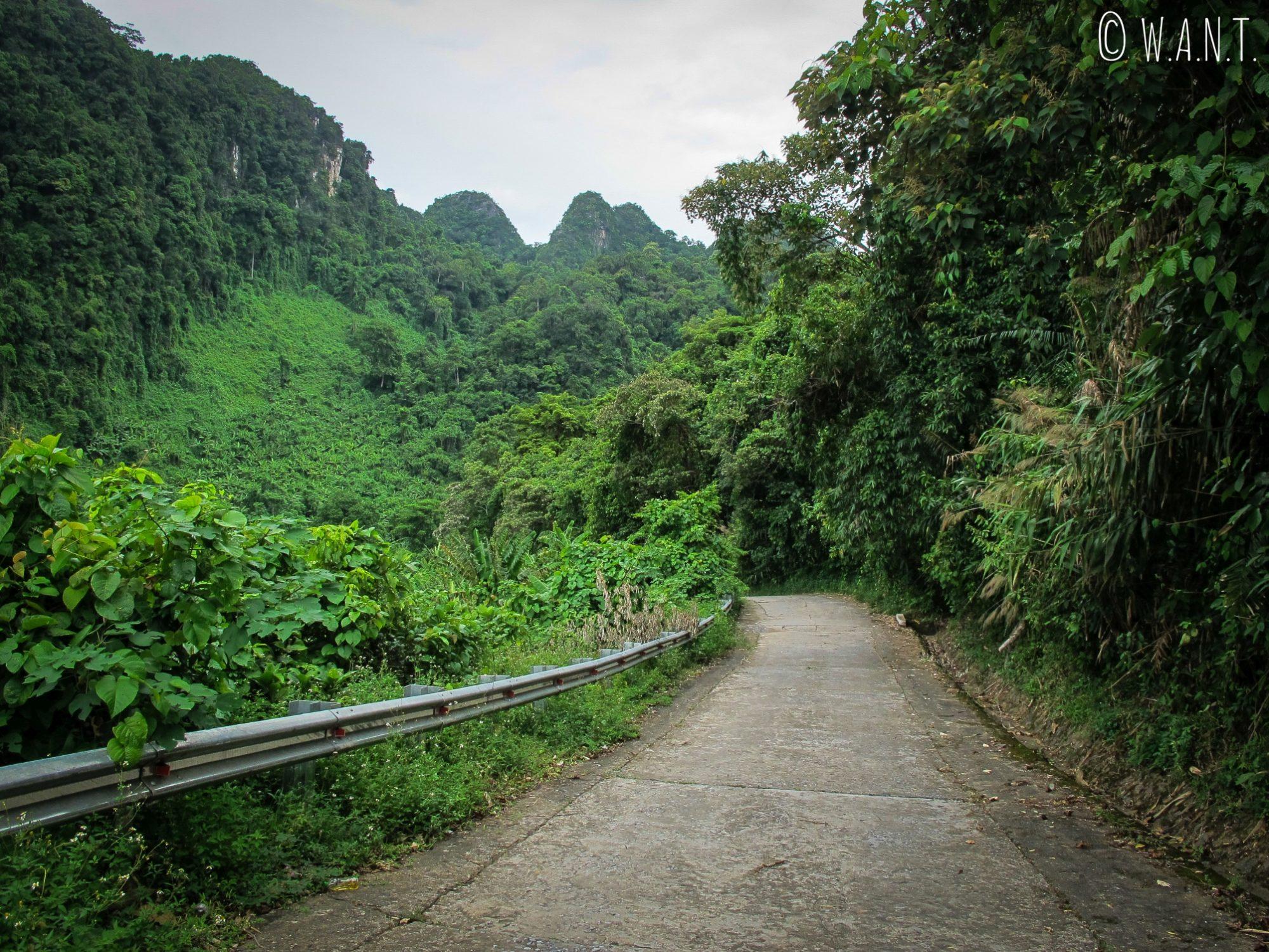 Chemin à l'intérieur du parc national Phong Nha-Ke Bang