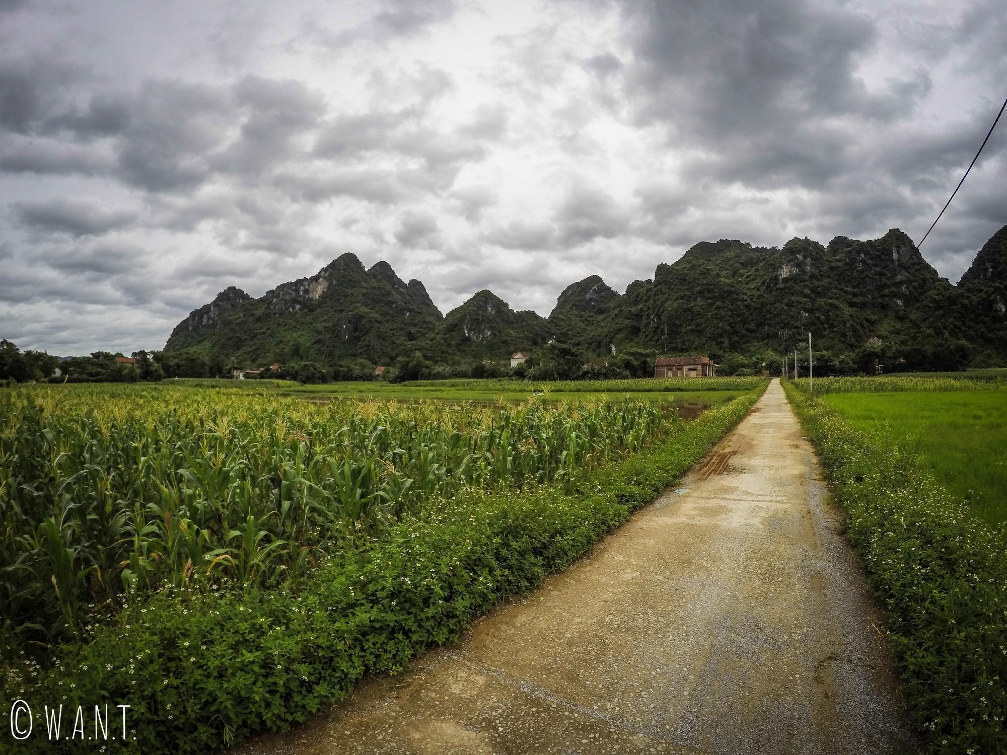 Chemin, cultures et pics karstiques à Phong Nha