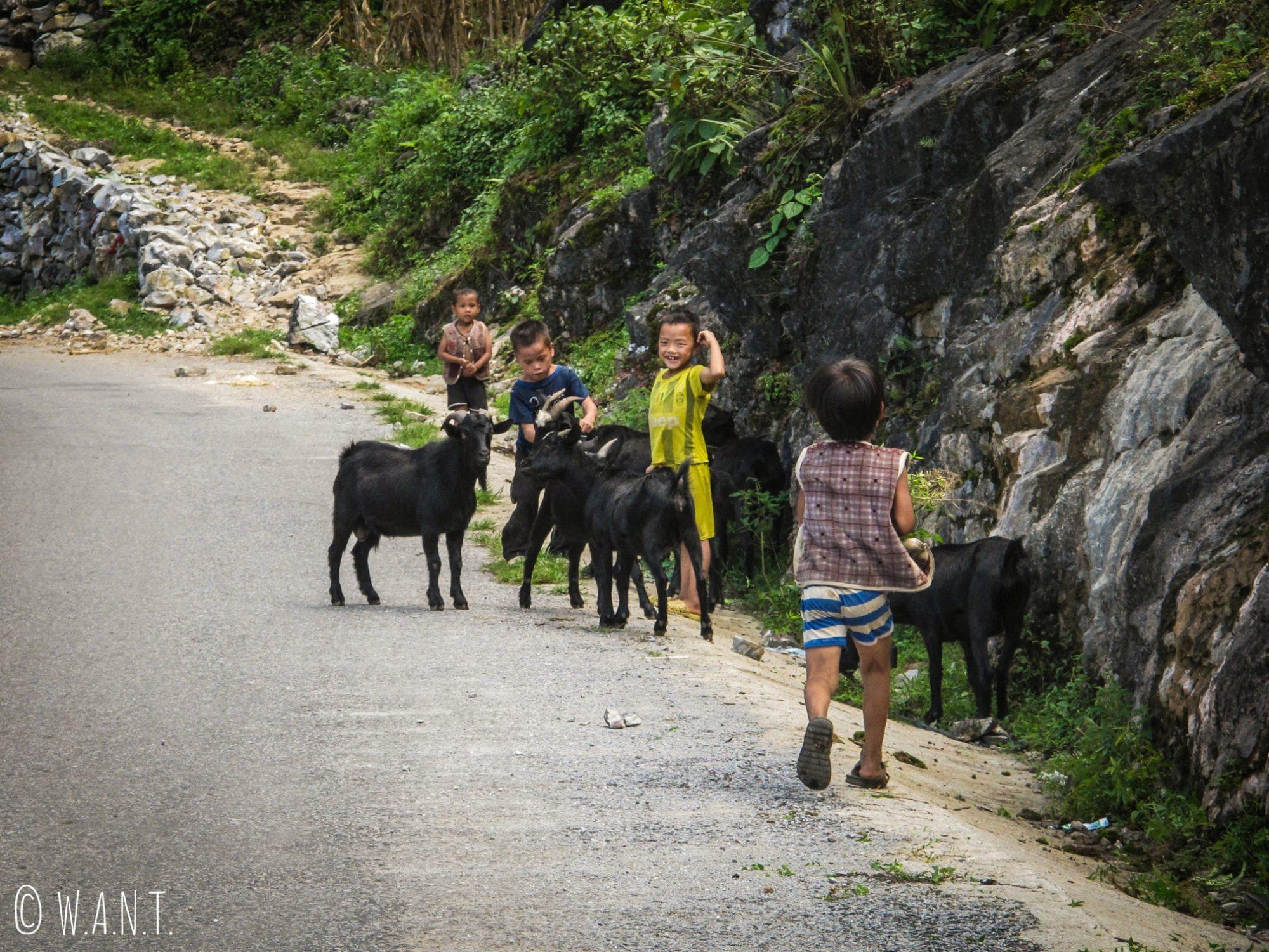 Enfants et troupeau sur la route de Dong Van à Meo Vac