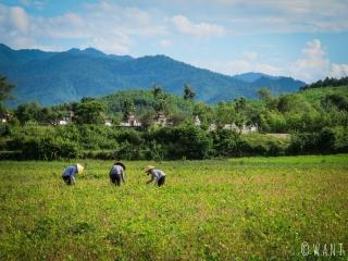 Femmes travaillant dans les rizières près du parc national Phong Nha-Ke Bang