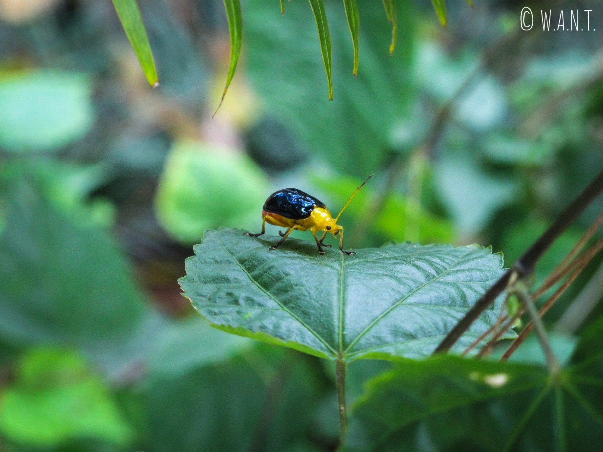 Gros plan sur ce petit insecte jaune et noir dans les jardins de Truc Lâm Temple