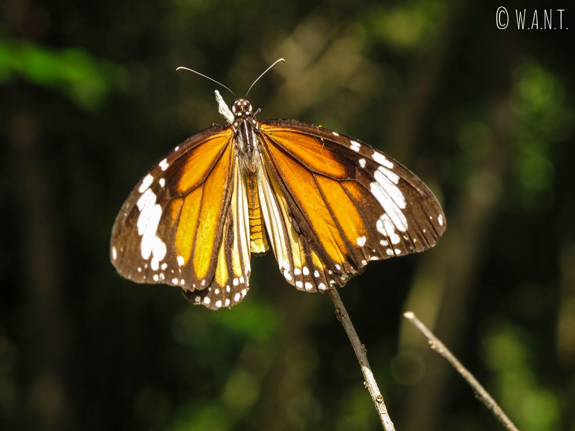Gros plan sur un papillon sur le site de My Son