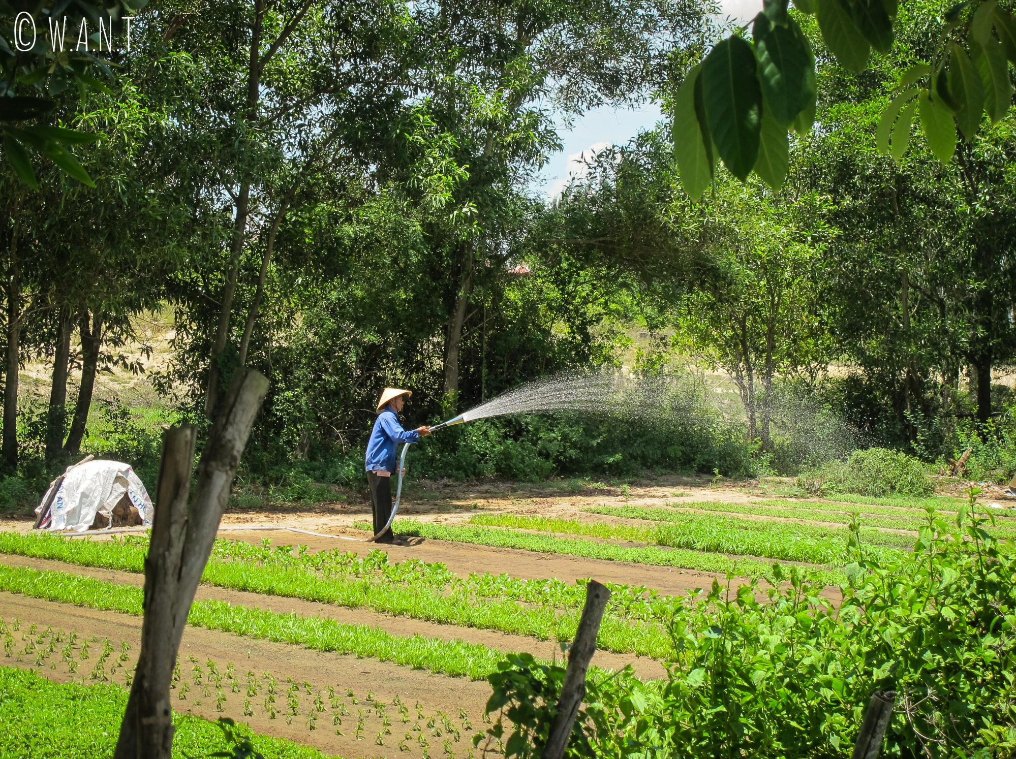 Jardiniers dans le village écologique de Tra Que à Hoi An