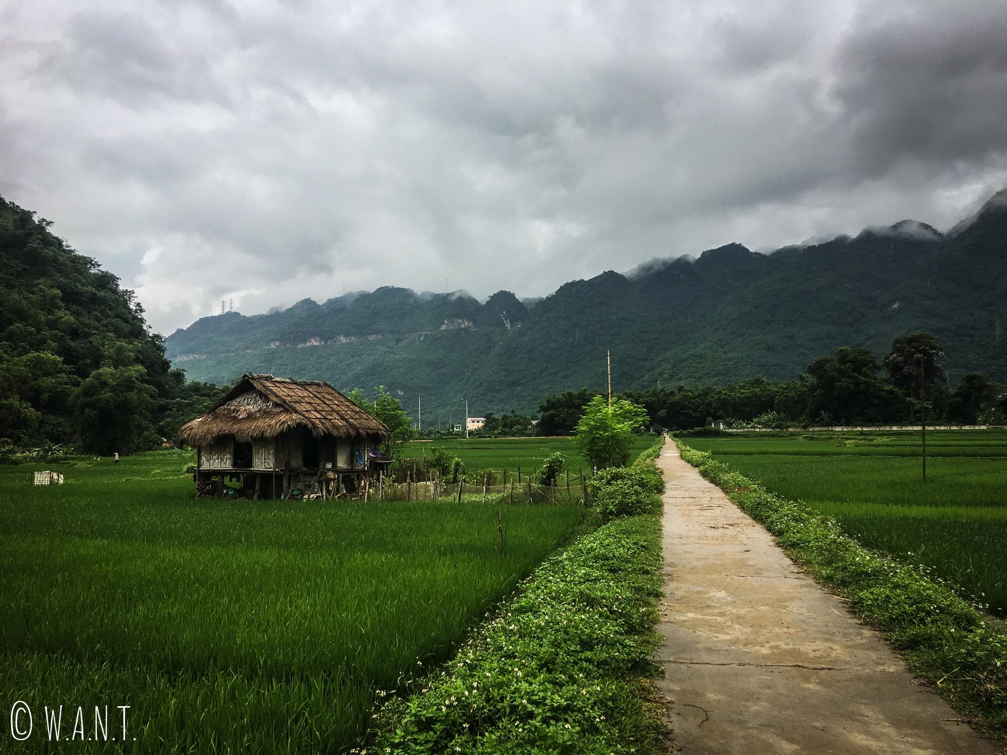 Maison sur pilotis au cœur des rizières de Mai Chau