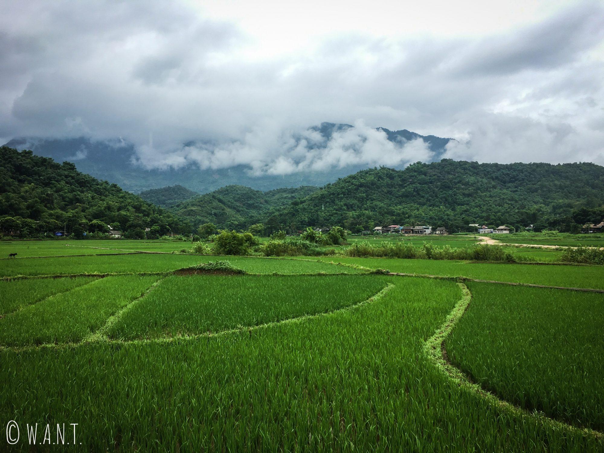 Paysage de rizières à perte de vue à Mai Chau