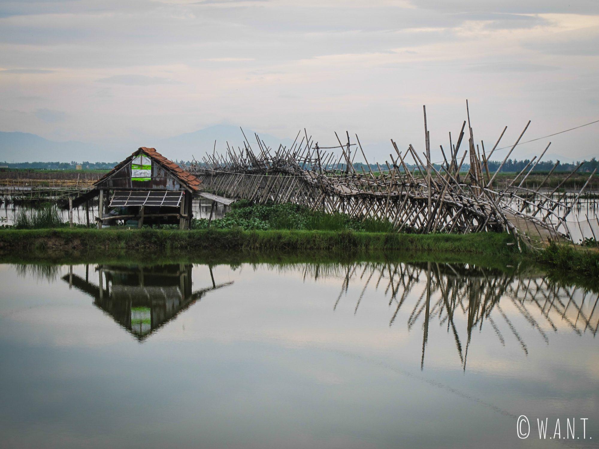 Pont de bambou à travers les rizières près de Hoi An