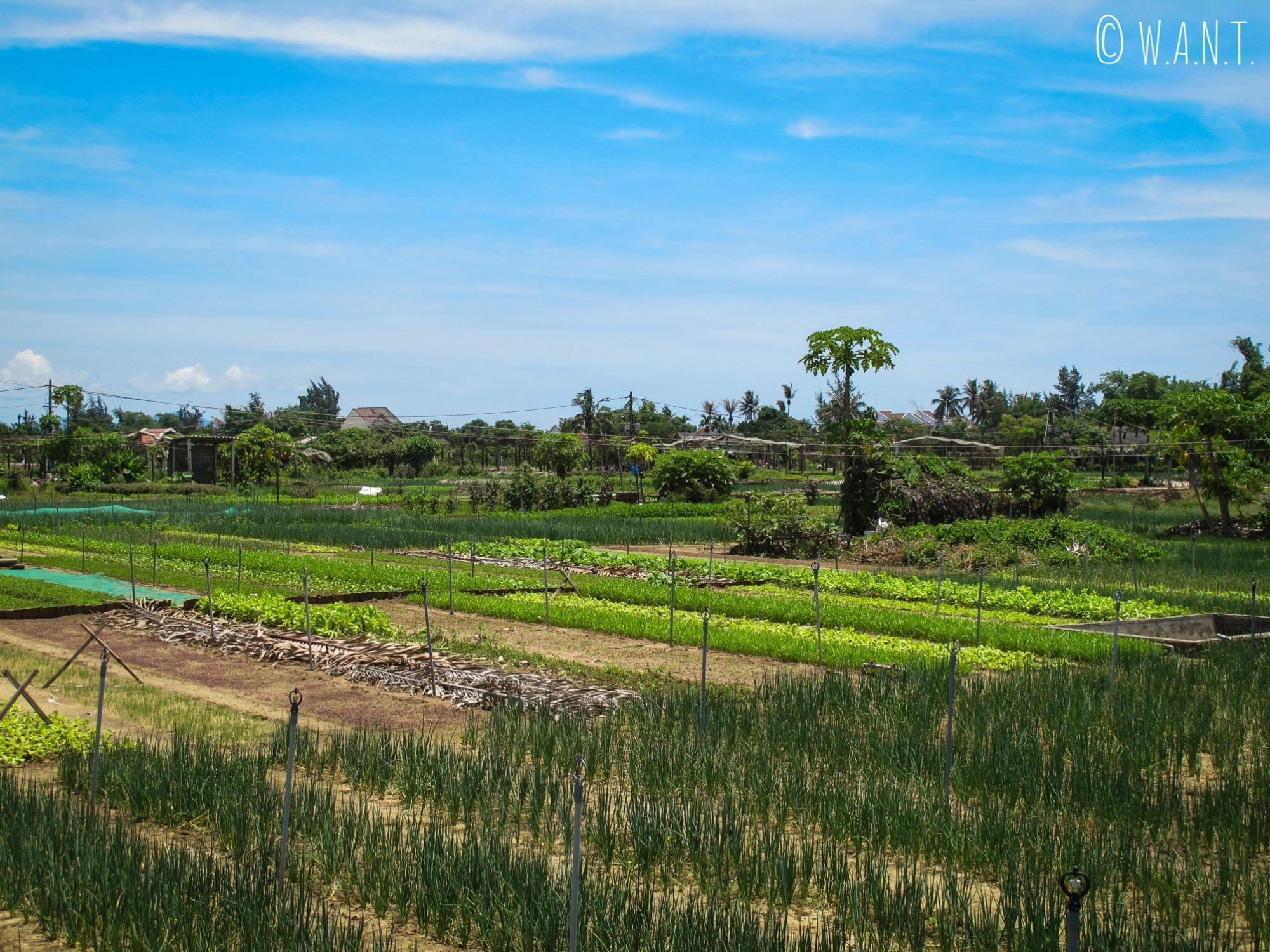 Potagers du village écologique de Tra Que à Hoi An
