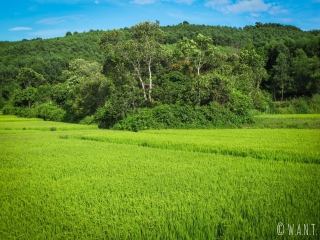 Rizières du parc national Phong Nha-Ke Bang