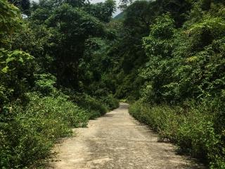 Route déserte et entourée de végétation de la presqu'île Son Tra