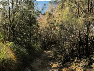 Chemin menant du Seruni Point à King Kong Hill