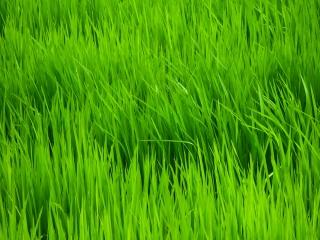 Gros plan sur les rizières de Jatiluwih à Bali
