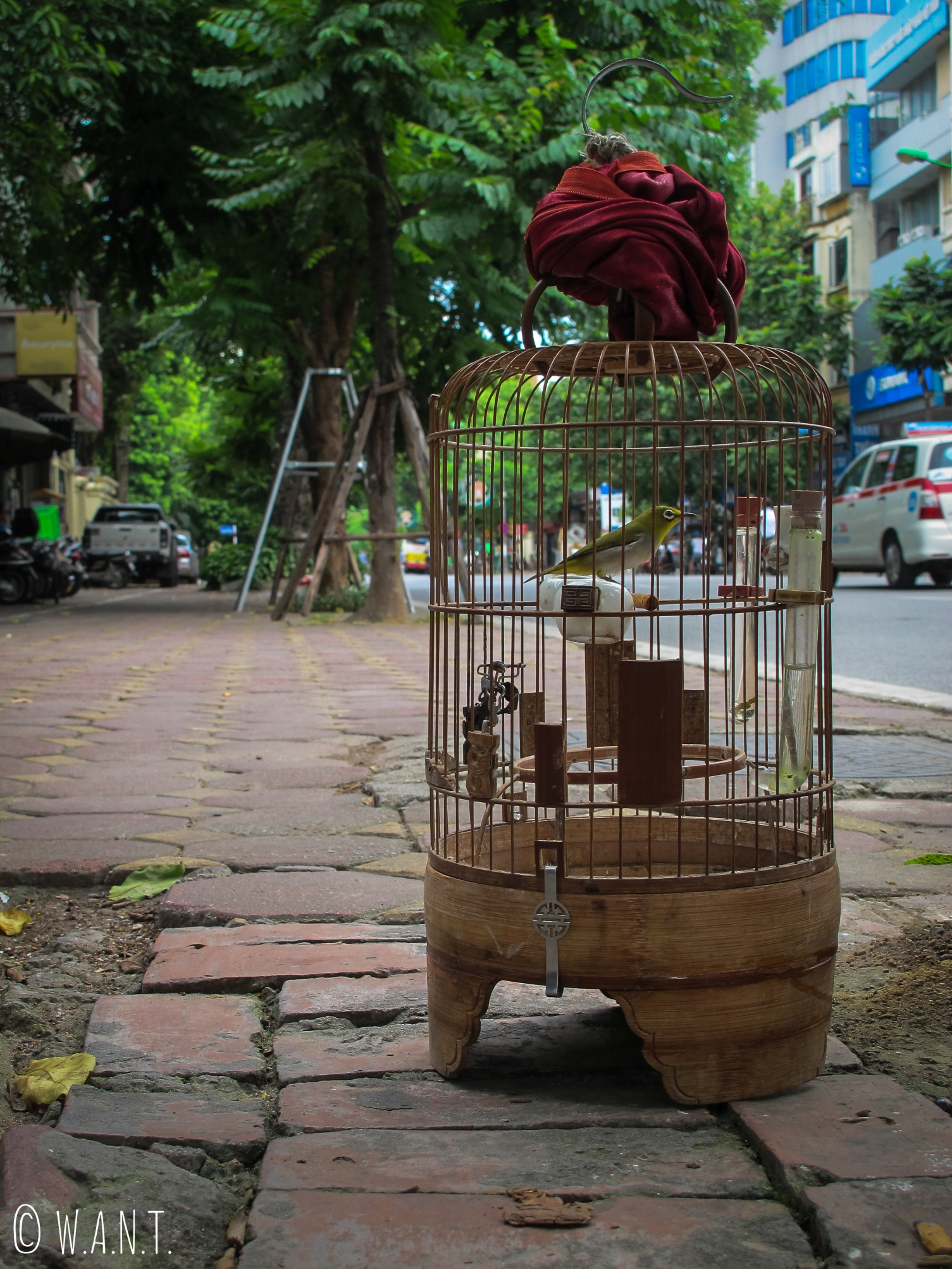 La collection de cage et d'oiseaux est une passion au Vietnam
