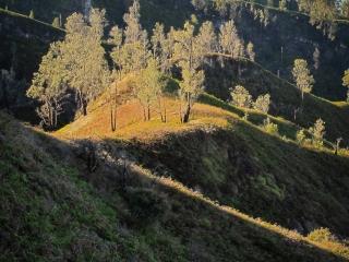 Paysage le long du chemin menant au cratère du Kawah Ijen