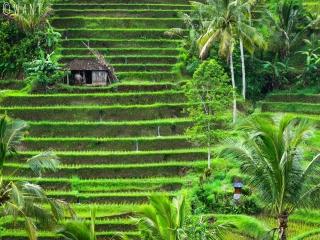 Rizières de Jatiluwih à Bali