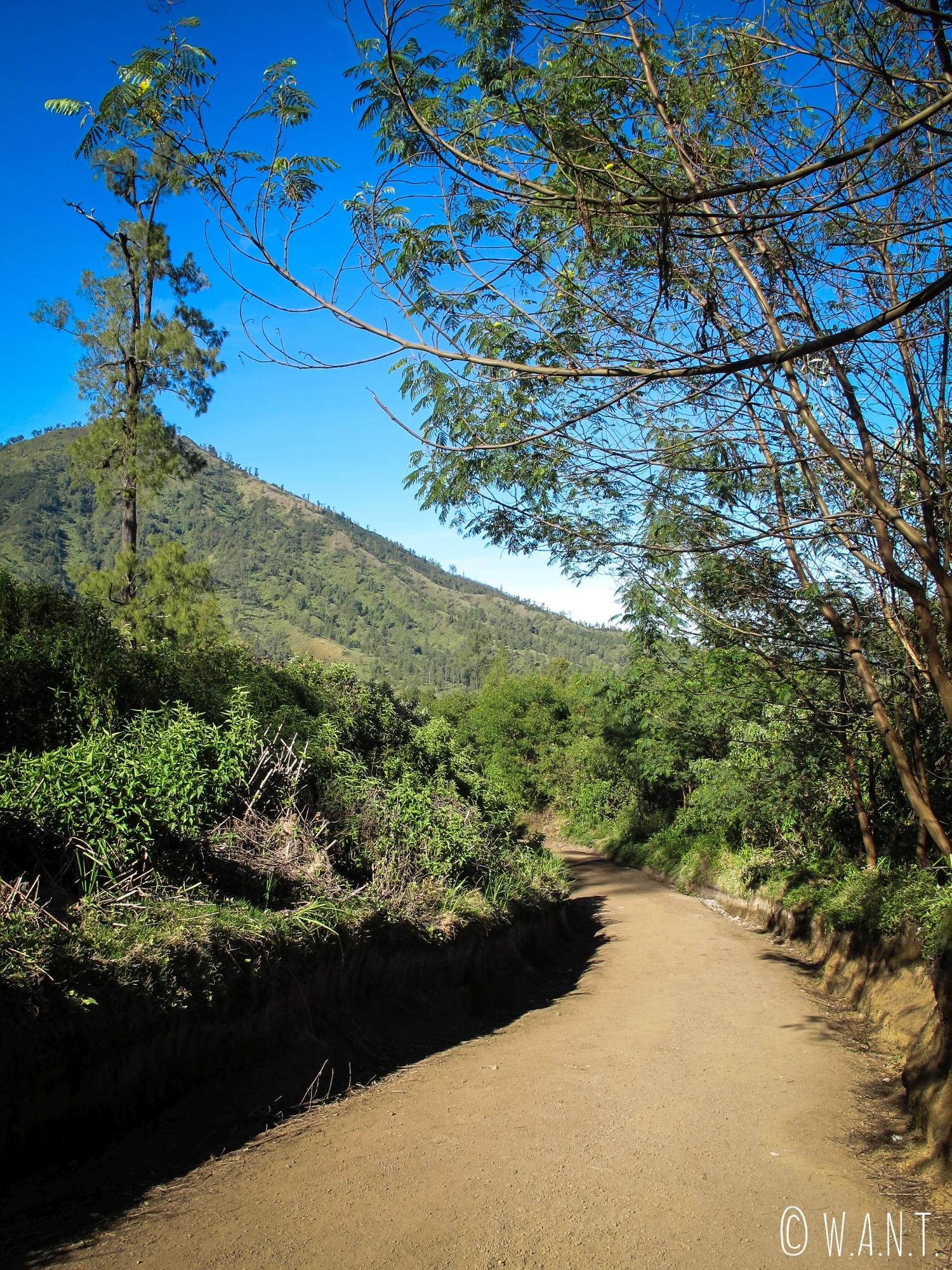 Sentier menant au cratère du Kawah Ijen