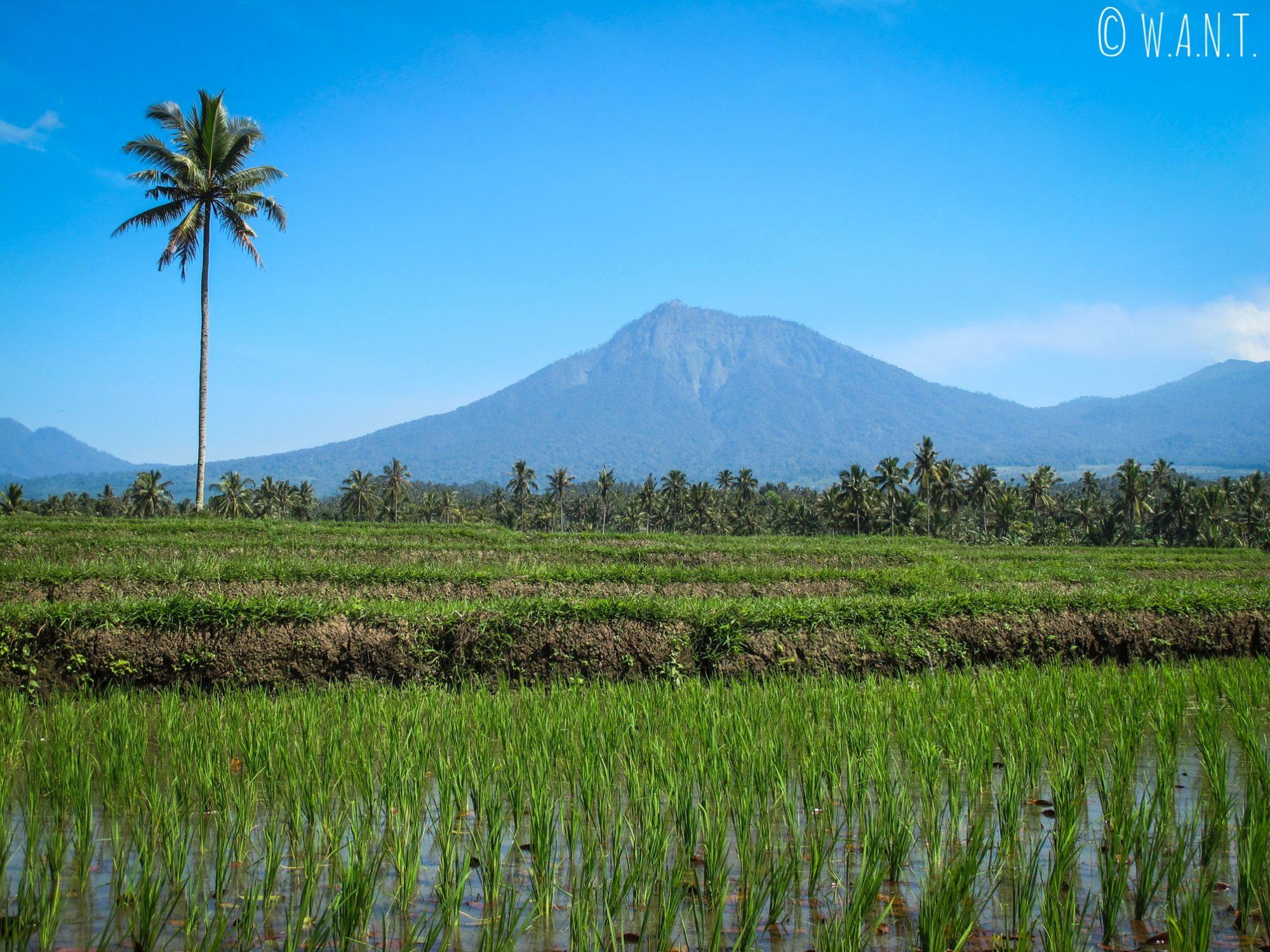 Vue sur l'Ijen depuis les rizières de Licin