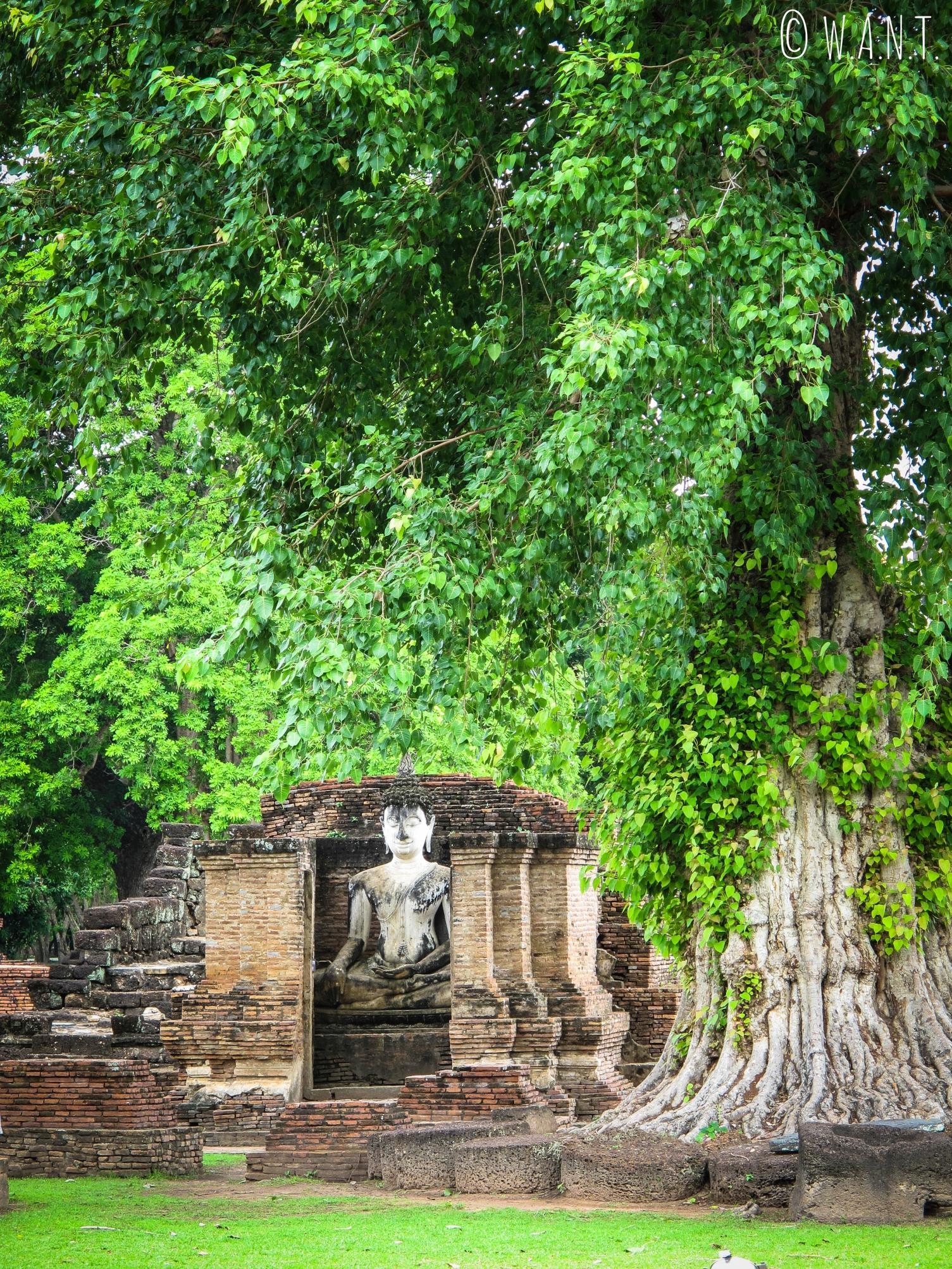 Bouddha en pleine nature au Wat Mahathat de Sukhothai