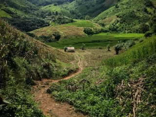 Chemin emprunté pendant notre trek à Chiang Rai