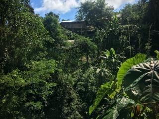 Habitation traditionnelle au milieu de la végétation pendant notre trek à Chiang Rai